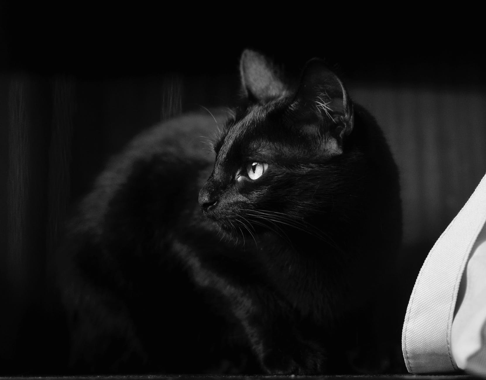 monochrome photography of black cat